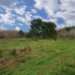 A vendre terrain loisir bois 1311 coudoux